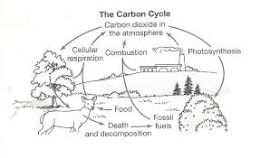 Carbon-cycle-worksheet & ... Global Carbon Cycle Diagram For ...