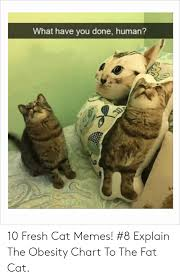 What Have You Done Human 10 Fresh Cat Memes 8 Explain The
