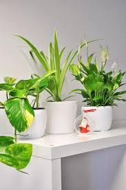 Badezimmer Mix 3 Pflanzen