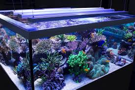 make the look even more attractive and fascinating examples of led aquarium lighting