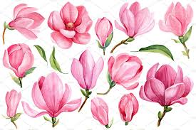Pink Magnolia Watercolor By Gringoann On At Creativemarket арт в