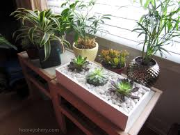Diy Succulent Box Homey Oh My With Indoor Succulents Garden 2017 Indoor  Succulents Garden