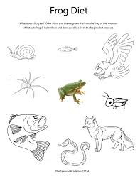 40 best School - Science (food chains) images on Pinterest ...