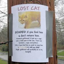Lost Pet Flyer Maker Funny lost cat poster Funny Pinterest Cat posters 62