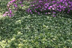 early spring perennials. Brilliant Perennials Early Spring Blooming Perennials For Libertyville Gardens With A