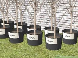 How To Plant Fruit Trees With Pictures  WikiHowWhen Do You Plant Fruit Trees