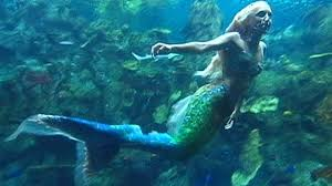 real mermaids found alive discovery channel. Real Mermaid Found Alive Discovery Channel Google Search Inside Mermaids