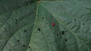 garden insecticide. Organic Gardening:Organic Garden Pesticides Best Pesticide Insecticide For Vegetable Plants