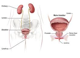 Itâ s impossible to restrain the spread of cancer cells. Symptoms Causes Of Bladder Control Problems Urinary Incontinence Niddk