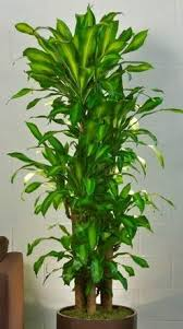 order plants online. Seven Easy Rules Of Order Indoor Plants Online