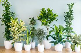 office plants no light. Modren Office Awesome Office Plants Low Light No Indoor Tree  Ideas Interior To T
