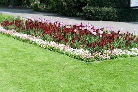 flower bed plants cozy innovative plant border uk bedding plants