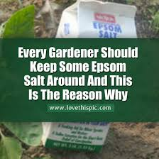 epsom salts for gardening. Epsom Salt Is A Natural Mineral That Was First Discovered In Epsom, England. People Typically Use The Bathroom To Relieve Aches And Pains Or Salts For Gardening