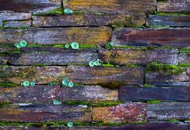 old brick wall background free stock