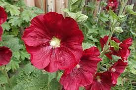 12 red flowers to bring vibrancy to the