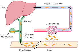 bile acids and plant pounds