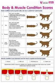 62 Experienced Cat Muscle Chart