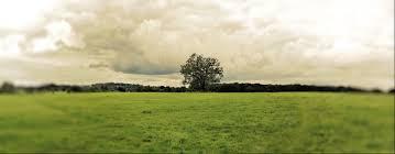 Resultado de imagem para Esperança verde árvore