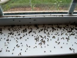 Small Black Flying Bugs In Bedroom Rabble Collective Noun For Gnats R Pinterest Apartments