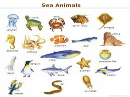 Ocean Animals Potty Chart Personalized Fully Assembled Water