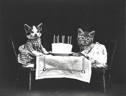 フリー画像素材 動物 哺乳類 猫 ネコ 子猫 仔猫 誕生日
