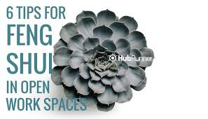 feng shui plant office. 6 Tips To Create Office Feng Shui For Open Work Spaces Plant