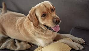 repurpose furniture dog. We Help You Choose The Best Dog Crate Furniture Repurpose N