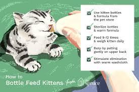 Baby Kitten Feeding Chart How To Bottle Feed Your Newborn Kittens