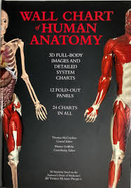 Wall Chart Of Human Anatomy 3d Dull Body Images And