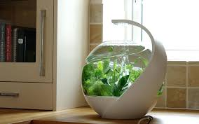 office fish tank designs office fish tanks office fish tank amazon . office  fish tank ...