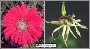 average american flower size flowering plants