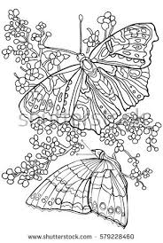 Butterfly Coloring Book Beautiful Photos Butterfly Coloring Book For