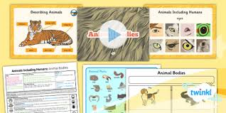 Science Animals Including Humans Animal Bodies Year 1 Lesson Pack 5