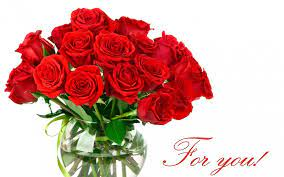 Red Rose png images ...