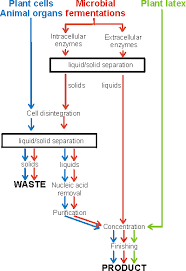 Enzyme Chart Preparation Of Enzymes