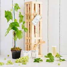 grow your own prosecco gift crate