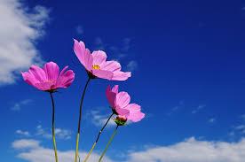 「花 フリー素材」の画像検索結果