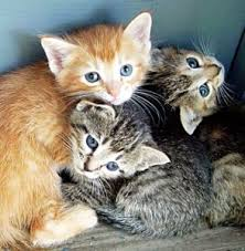 cats and kittens pictures. Delighful Kittens Itu0027s U201cKitten Seasonu201d And Shelters Are Brimming With Cats Kittens  Providing Food Bedding Medical Care Is So Importantu2026 But Also Very Costly For  To Cats And Kittens Pictures N