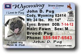 Wyoming Drivers License License Wyoming Drivers