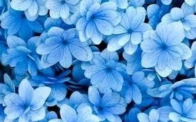 Aesthetic Light Blue Flower Wallpaper