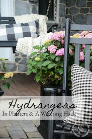 hydrangeas in planters and a self watering here s a great way to water you