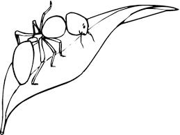 Dibujo De Hormiga Caminando Por Las Hojas Para Colorear