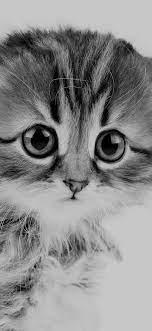 ms24-sad-kitten-cat-animal-nature-cute ...