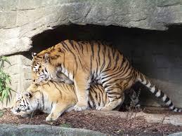 Hagenbeck zoo preise