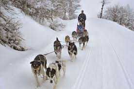dog sledding rides near steamboat springs