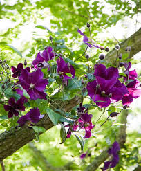 Top 10 Common Indian Garden Plants  BoldskycomWall Climbing Plants India