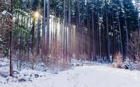 hd wallpaper nature winter. Beautiful Winter Images Nature Winter Download Hd And Hd Wallpaper Nature Winter T