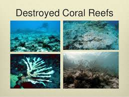 coral reef destruction essays paraphrasing hire a writer for help coral reef destruction essay writing