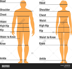 Man Woman Size Chart Vector Photo Free Trial Bigstock