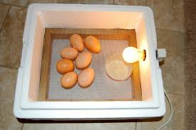 picture of the 3 30 minute egg incubator
